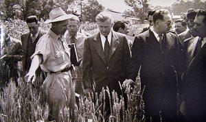 Wallace-Borlaug